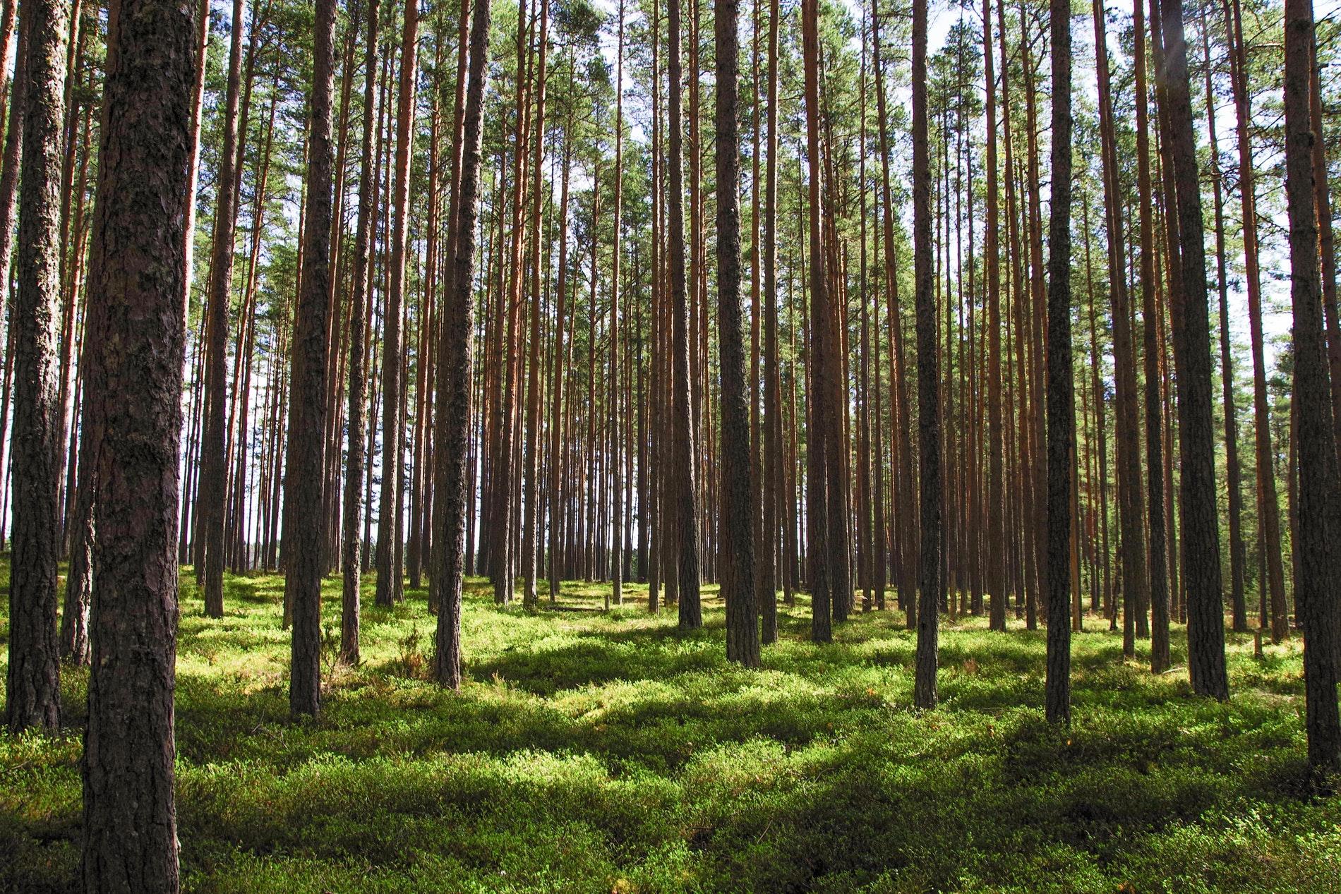 FIM Metsä Grupp